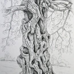 tree drawings edward foster artedward foster art