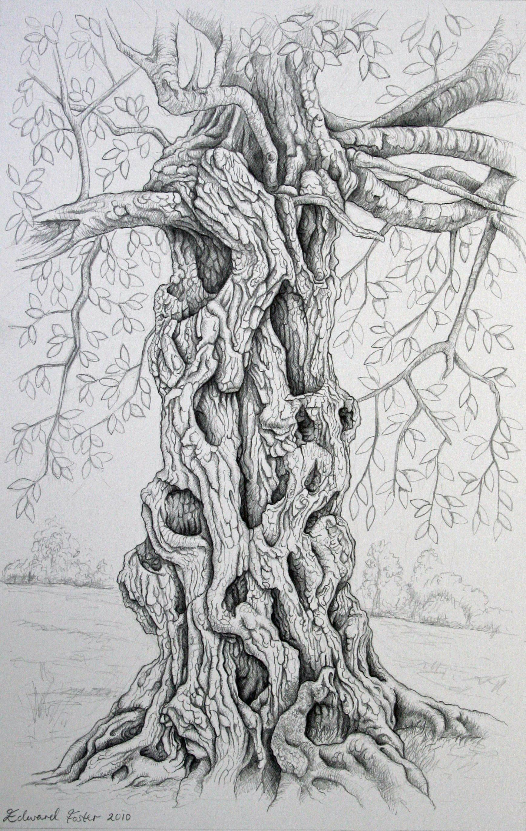 Tree Drawings - Edward Foster ArtEdward Foster Art
